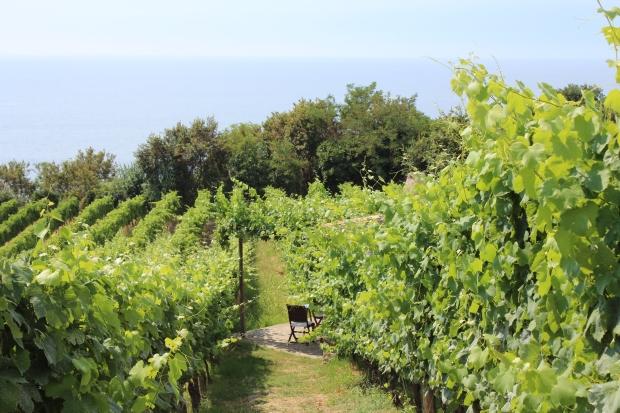 Steinhäuschen - umgeben von Weinreben